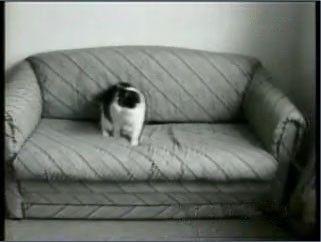 sample1 cats 2 - 如何删除视频中水印?4种方法总结